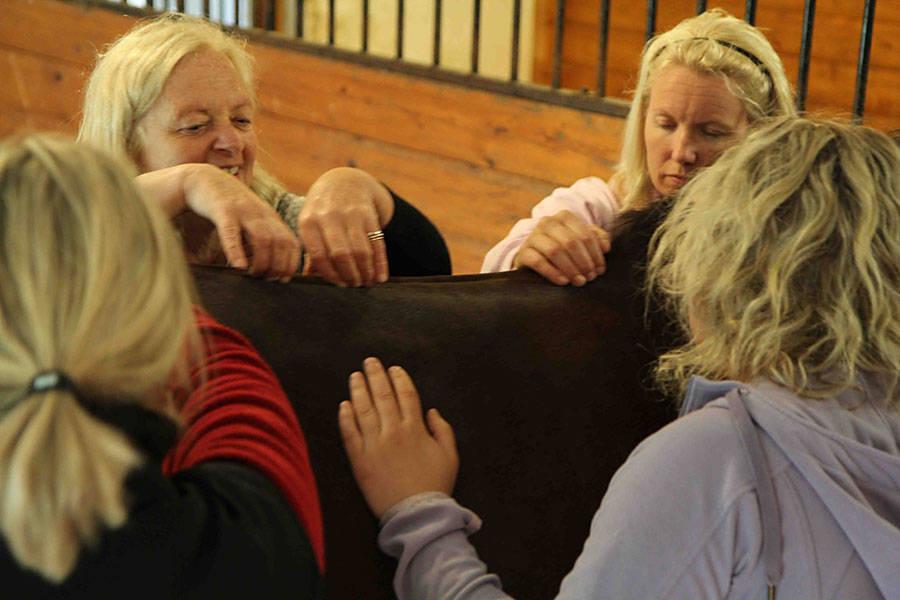 Craniosacral-utdanning-dyr-hest